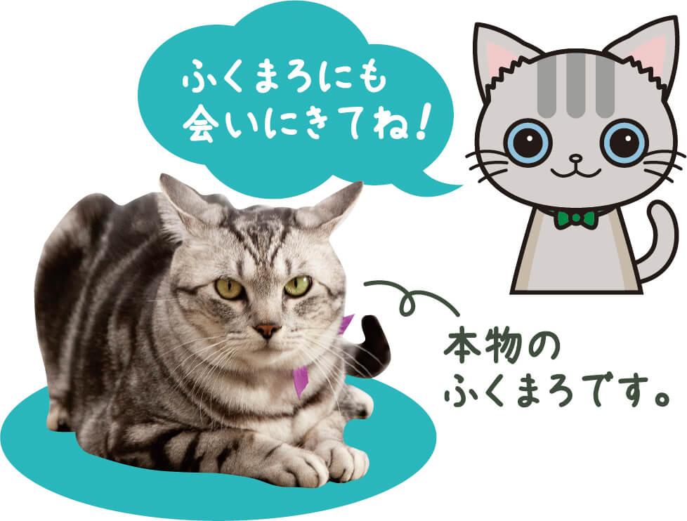 猫のふくまろにも会いにきてね!